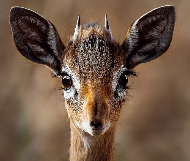 How Well Can A Deer Really See The Swift Lift