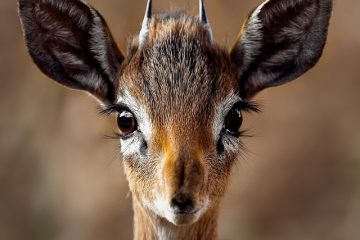 https://www.theswiftlift.com/wp-content/uploads/2017/08/deer-eyes-360x240.jpeg